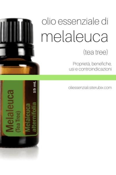 olio-essenziale-di-melaleuca-tea-tree-proprietà-benefiche-usi-controindicazioni